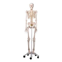 """Skelett A15 Flexibelt """""""
