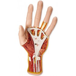 Hand inre struktur M18 3 delar